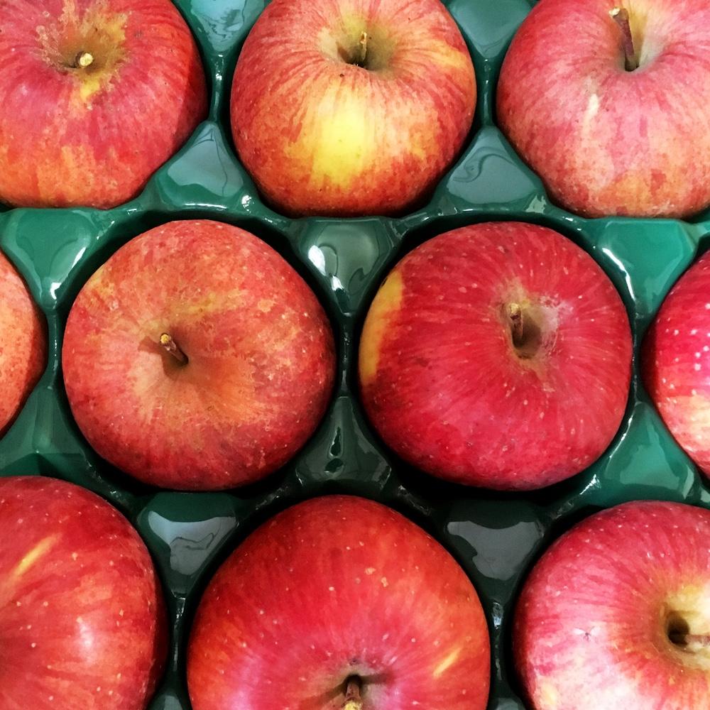 ジンギスカンだけじゃない!信州新町から美味しいりんごが届きました!